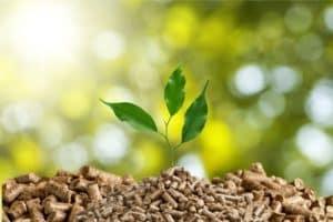 Ökostrom: Energie aus Biomasse